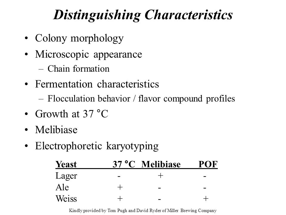 Distinguishing Characteristics Colony morphology Microscopic appearance –Chain formation Fermentation characteristics –Flocculation behavior / flavor