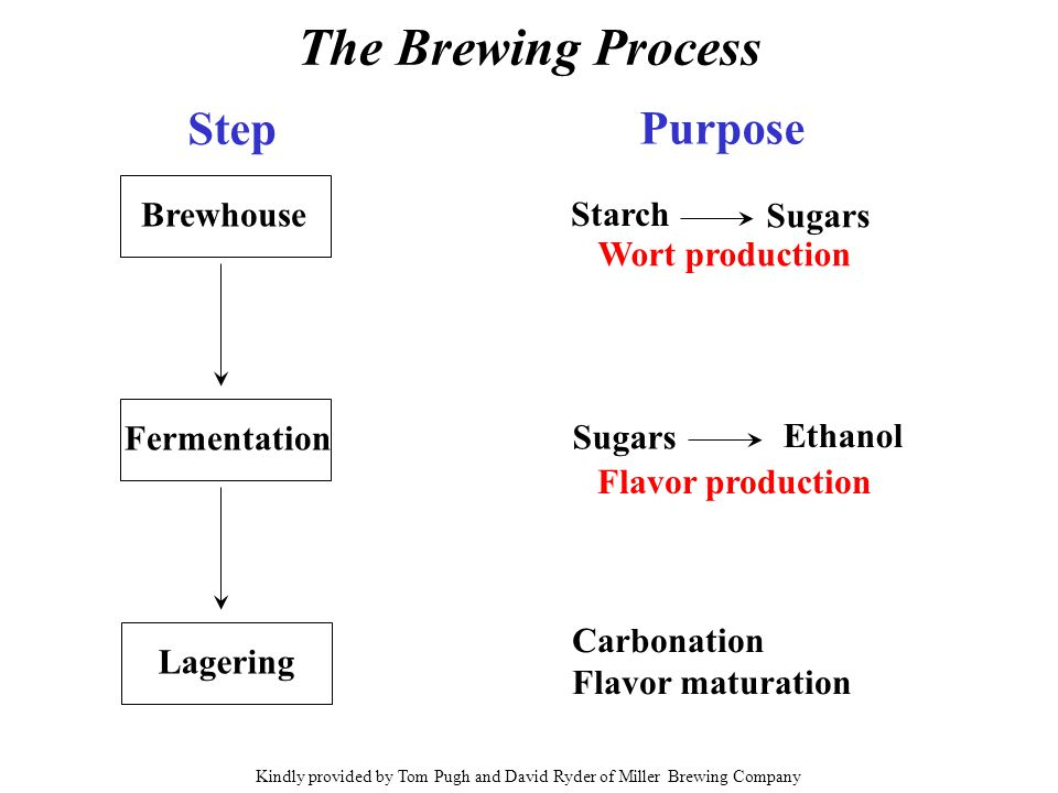 The Brewing Process Brewhouse Fermentation Lagering Step Purpose Starch Sugars Ethanol Sugars Carbonation Flavor maturation Wort production Flavor pro