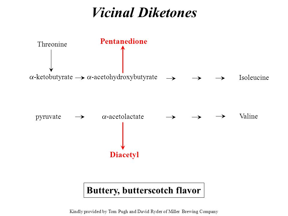 Vicinal Diketones Threonine  -ketobutyrate pyruvate  -acetolactate  -acetohydroxybutyrate Isoleucine Valine Diacetyl Pentanedione Buttery, butterscotch flavor Kindly provided by Tom Pugh and David Ryder of Miller Brewing Company