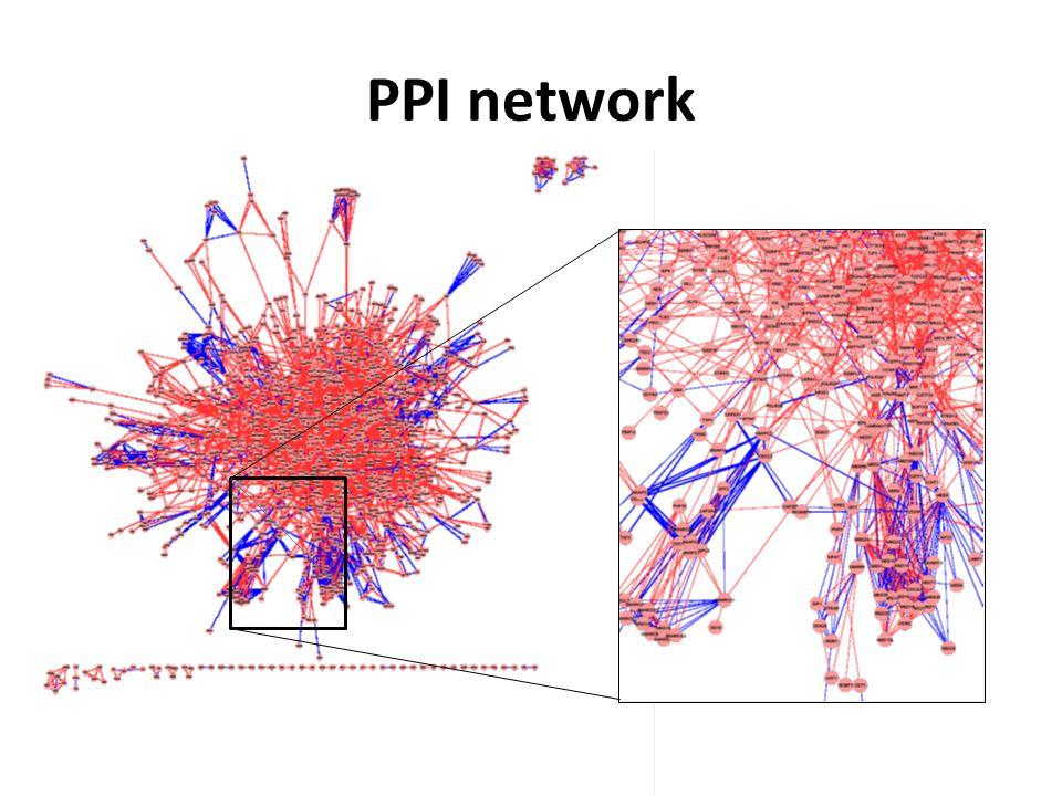 PPI network