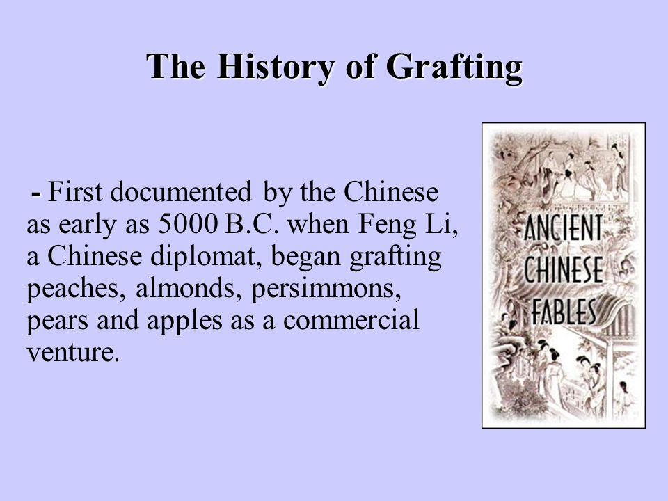 The History of Grafting - - First documented by the Chinese as early as 5000 B.C. when Feng Li, a Chinese diplomat, began grafting peaches, almonds, p