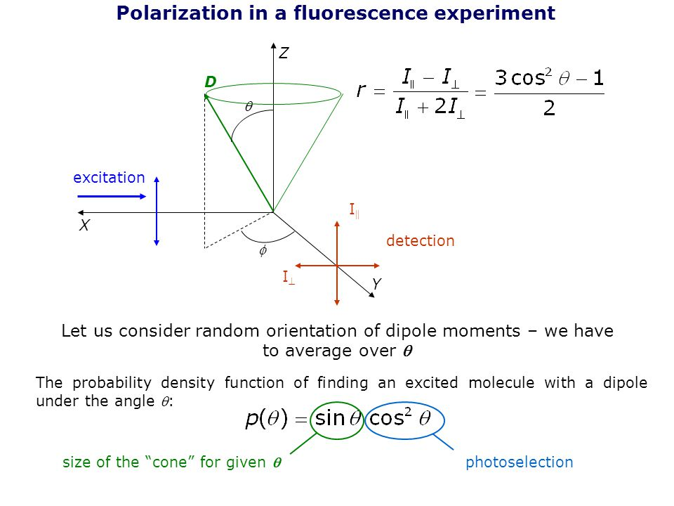 Polarization in a fluorescence experiment Z Y X excitation detection I  II Let us consider random orientation of dipole moments – we have to avera