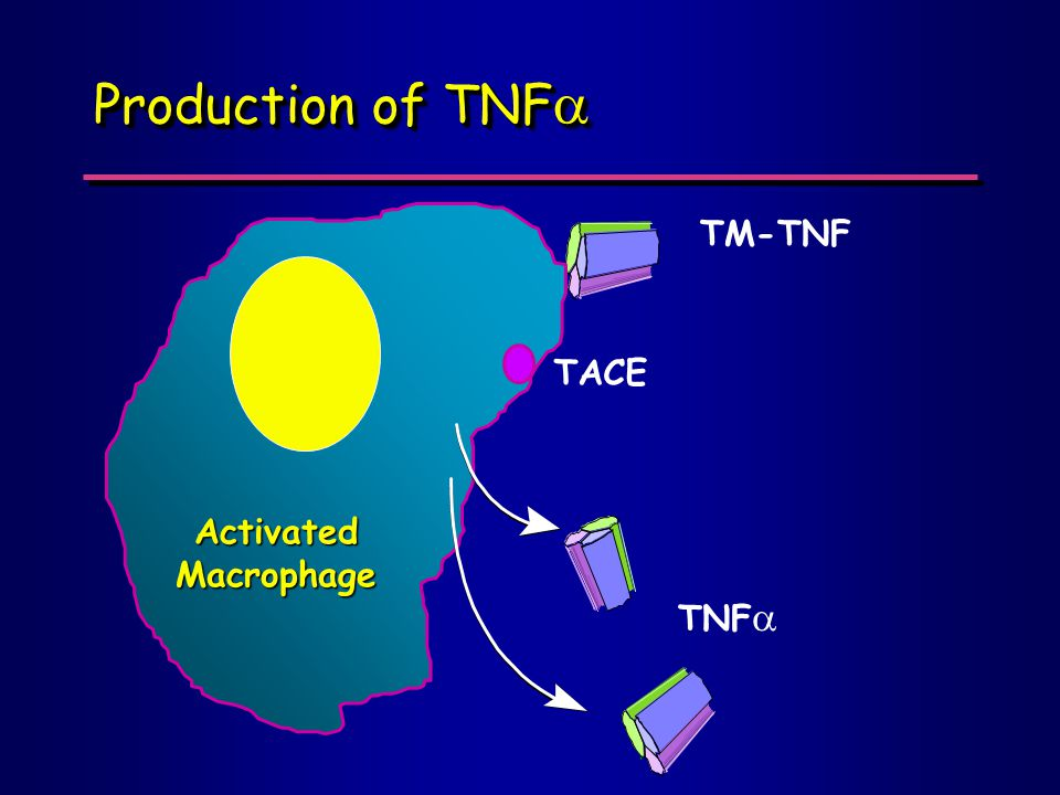 Production of TNF  ActivatedMacrophage TNF  TACE TM-TNF