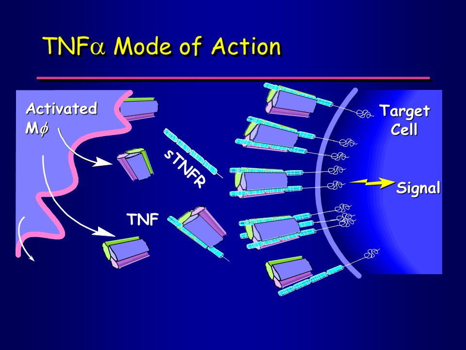 sTNFR TNF  Mode of Action Activated M  TNF