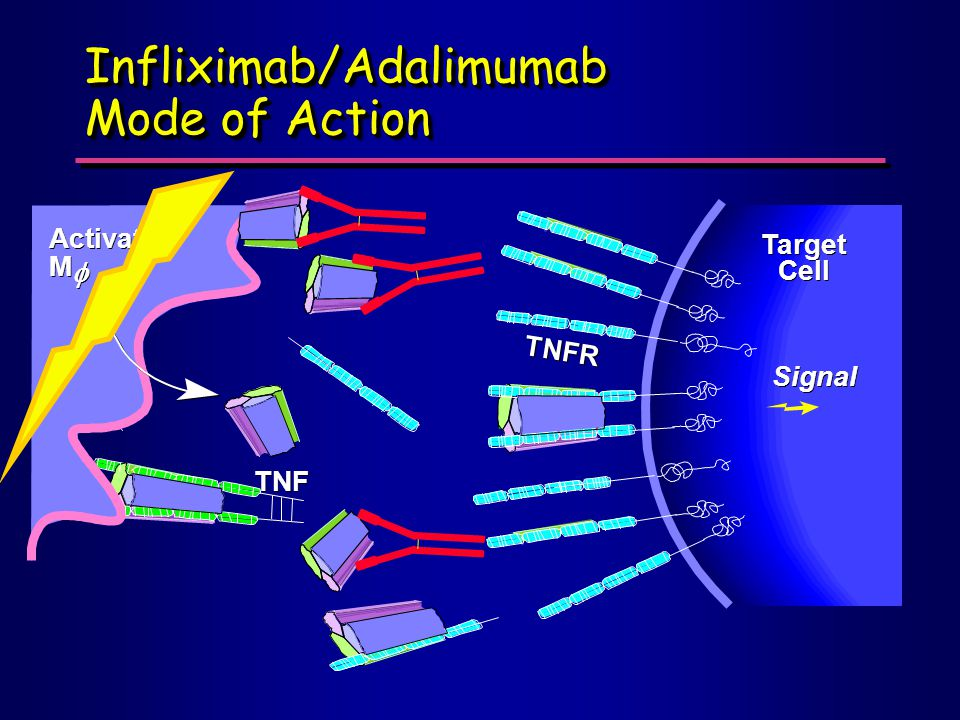 Infliximab/Adalimumab Mode of Action Activated M M   Target Cell Signal TNF TNFR