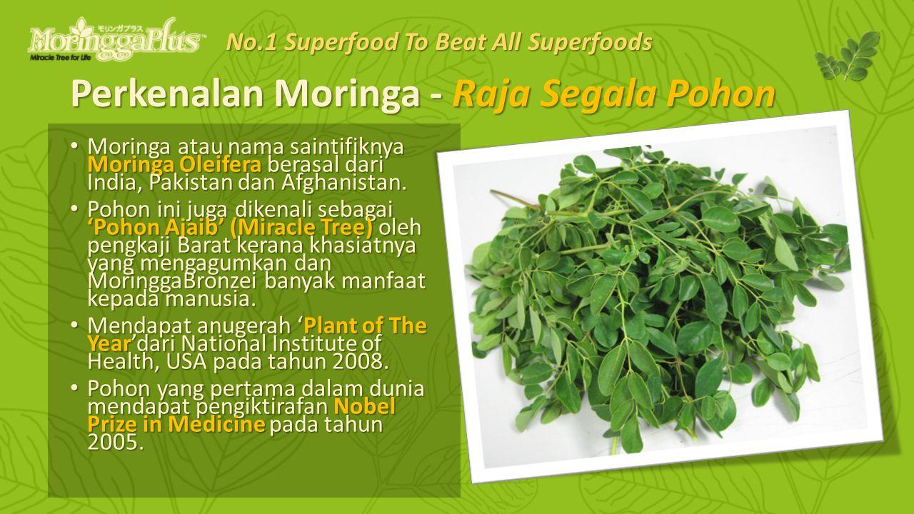 Perkenalan Moringa - Raja Segala Pohon Moringa atau nama saintifiknya Moringa Oleifera berasal dari India, Pakistan dan Afghanistan. Moringa atau nama