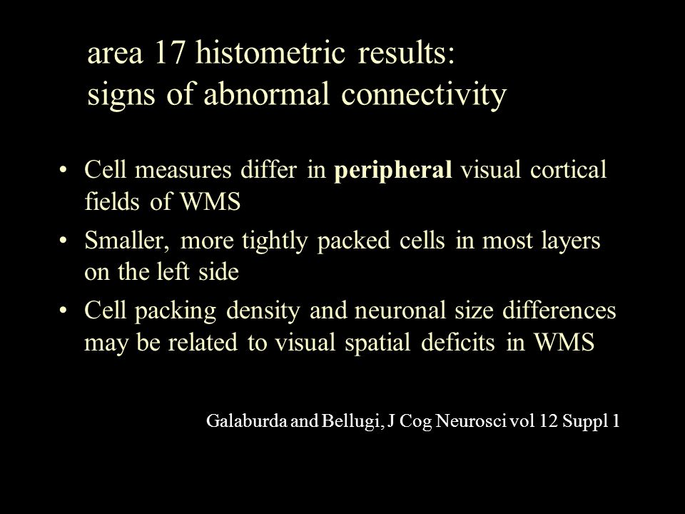 area 17 histometric results: signs of abnormal connectivity Cell measures differ in peripheral visual cortical fields of WMS Smaller, more tightly packed cells in most layers on the left side Cell packing density and neuronal size differences may be related to visual spatial deficits in WMS Galaburda and Bellugi, J Cog Neurosci vol 12 Suppl 1