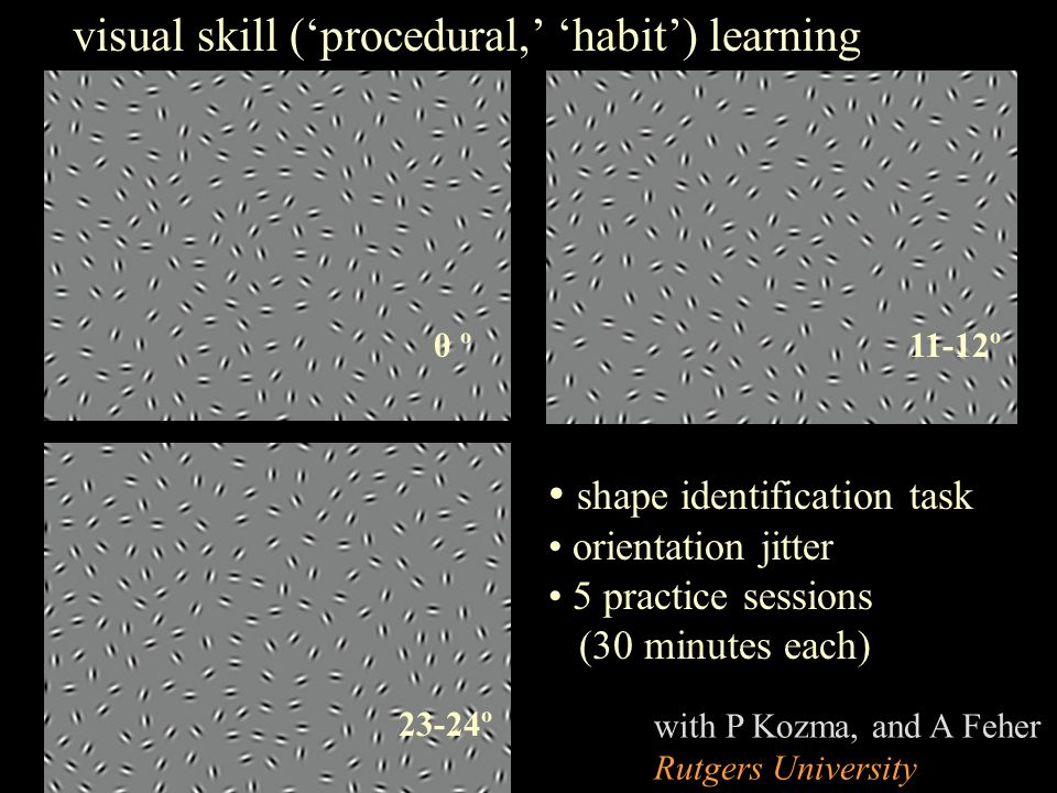 0 º 23-24º 11-12º shape identification task orientation jitter 5 practice sessions (30 minutes each) visual skill ('procedural,' 'habit') learning with P Kozma, and A Feher Rutgers University