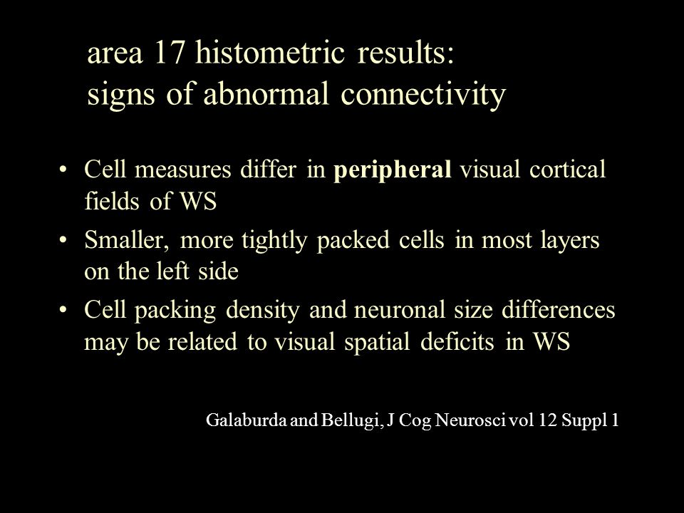 area 17 histometric results: signs of abnormal connectivity Cell measures differ in peripheral visual cortical fields of WS Smaller, more tightly pack