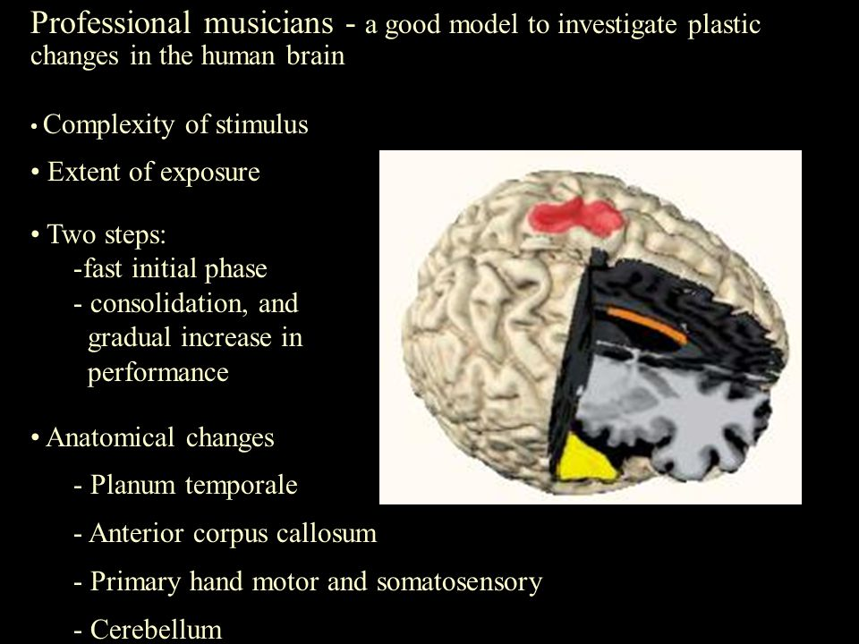Professional musicians - a good model to investigate plastic changes in the human brain Complexity of stimulus Extent of exposure Two steps: - -fast initial phase - - consolidation, and gradual increase in performance Anatomical changes - - Planum temporale - - Anterior corpus callosum - - Primary hand motor and somatosensory - - Cerebellum