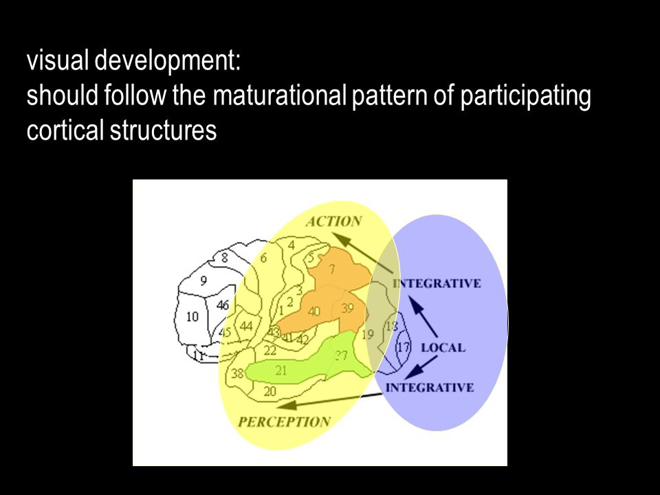 visual development: should follow the maturational pattern of participating cortical structures