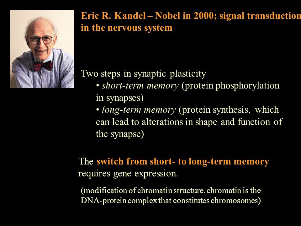 Eric R. Kandel – Nobel in 2000; signal transduction in the nervous system Two steps in synaptic plasticity short-term memory (protein phosphorylation