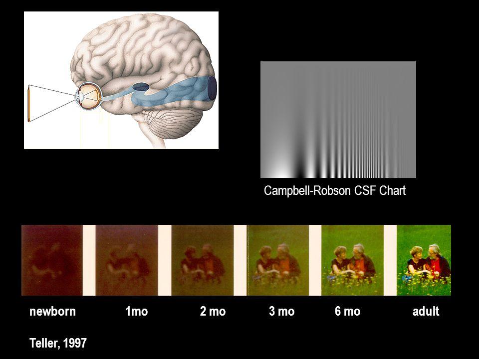newborn1mo 2 mo3 mo 6 moadult Teller, 1997 Campbell-Robson CSF Chart