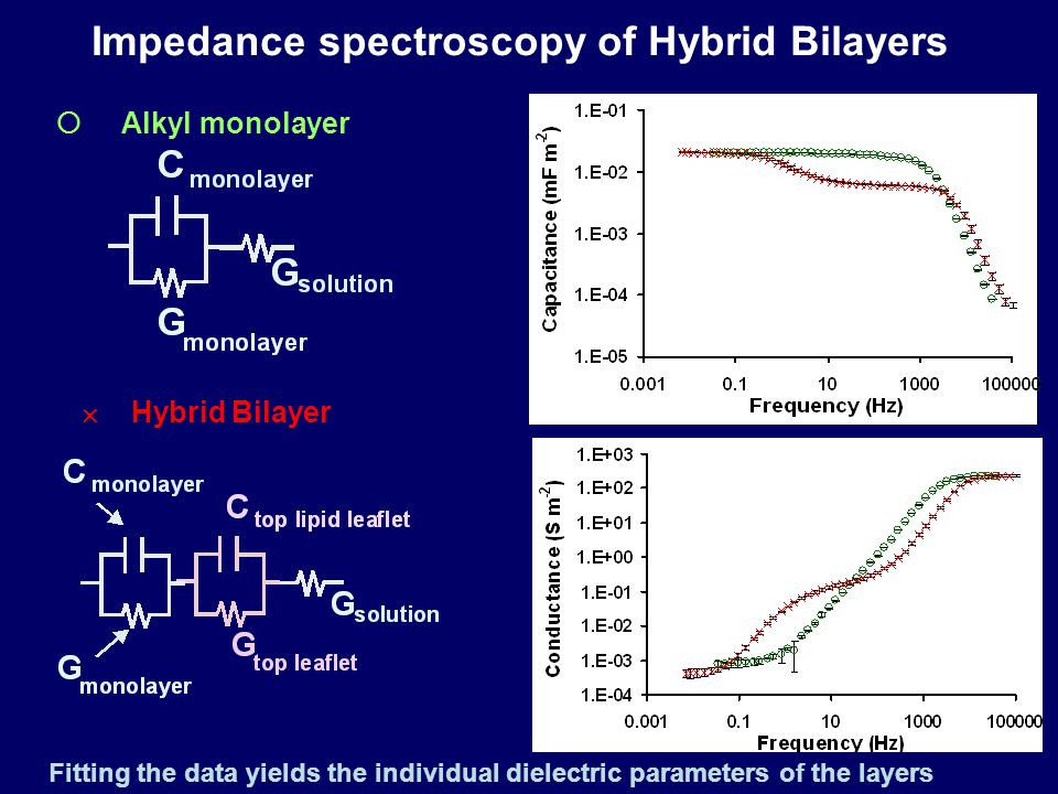  Alkyl monolayer  Hybrid Bilayer Impedance spectroscopy of Hybrid Bilayers Fitting the data yields the individual dielectric parameters of the layers