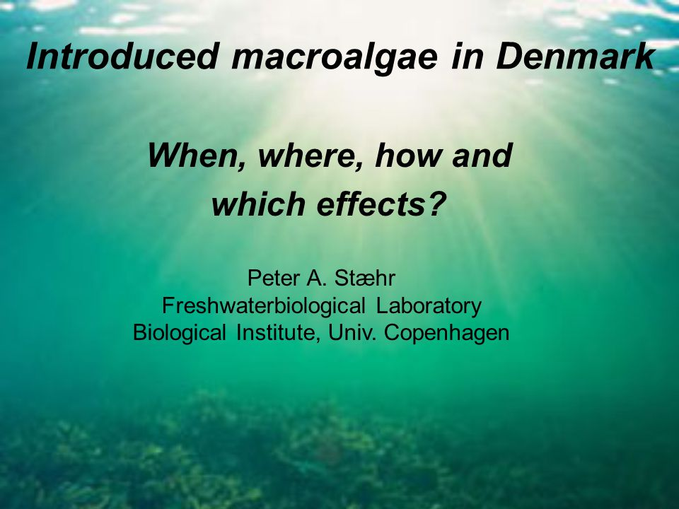 Introduced macroalgae in Denmark When, where, how and which effects.