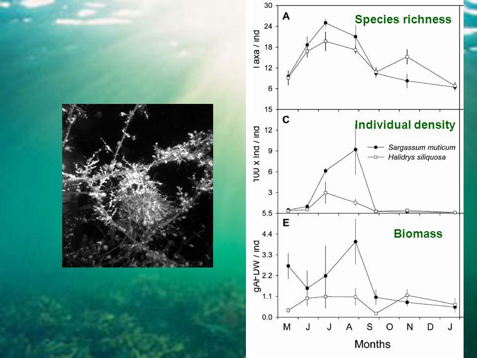 Species richness Individual density Biomass