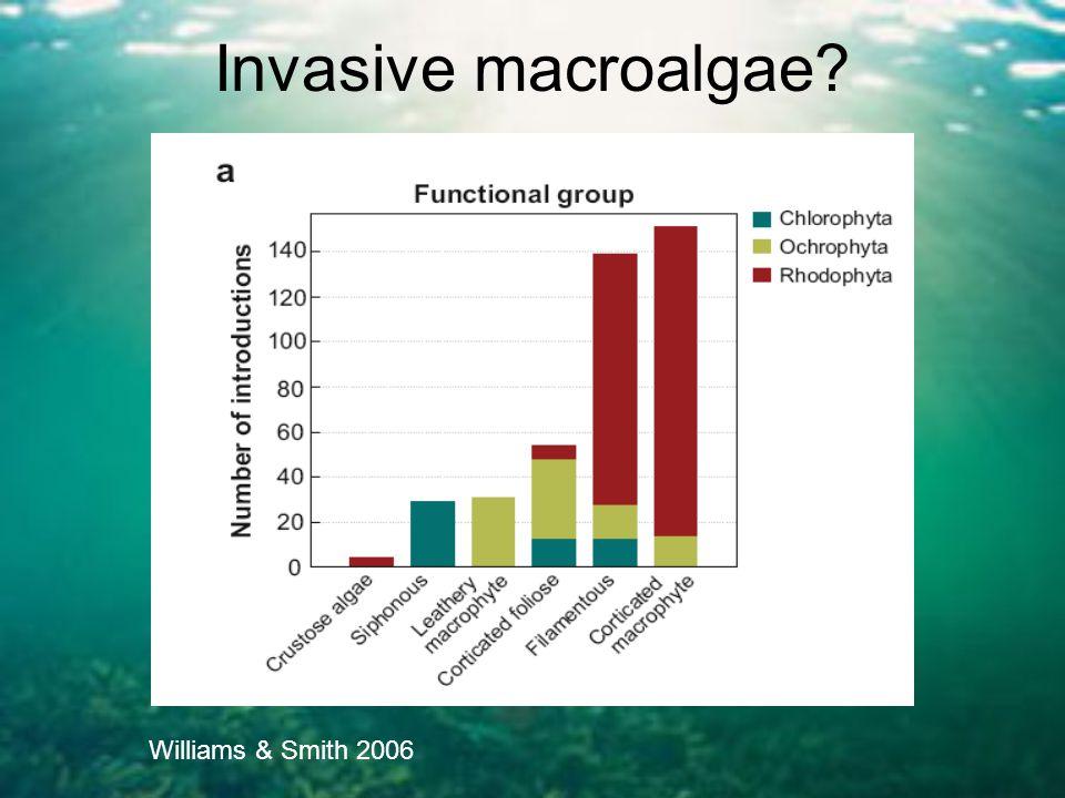 Invasive macroalgae? Williams & Smith 2006