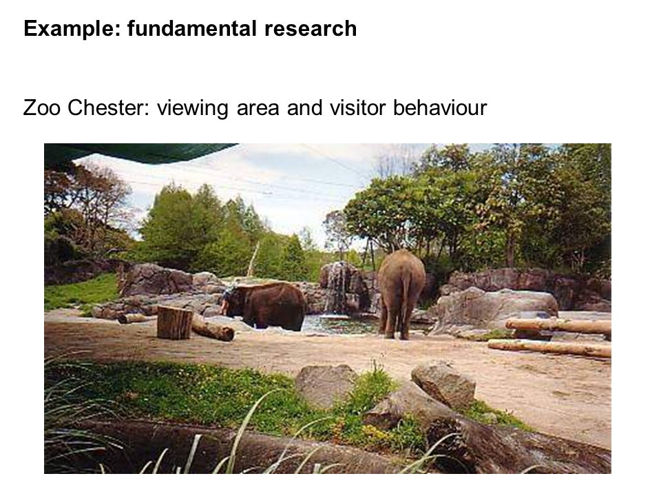 Example: fundamental research Zoo Chester: viewing area and visitor behaviour