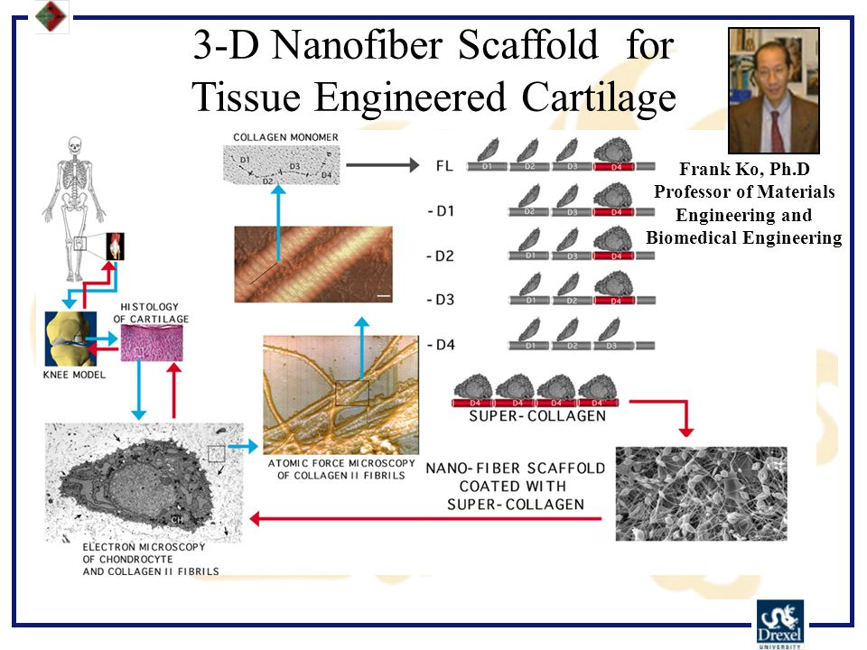 3-D Nanofiber Scaffold for Tissue Engineered Cartilage Frank Ko, Ph.D Professor of Materials Engineering and Biomedical Engineering
