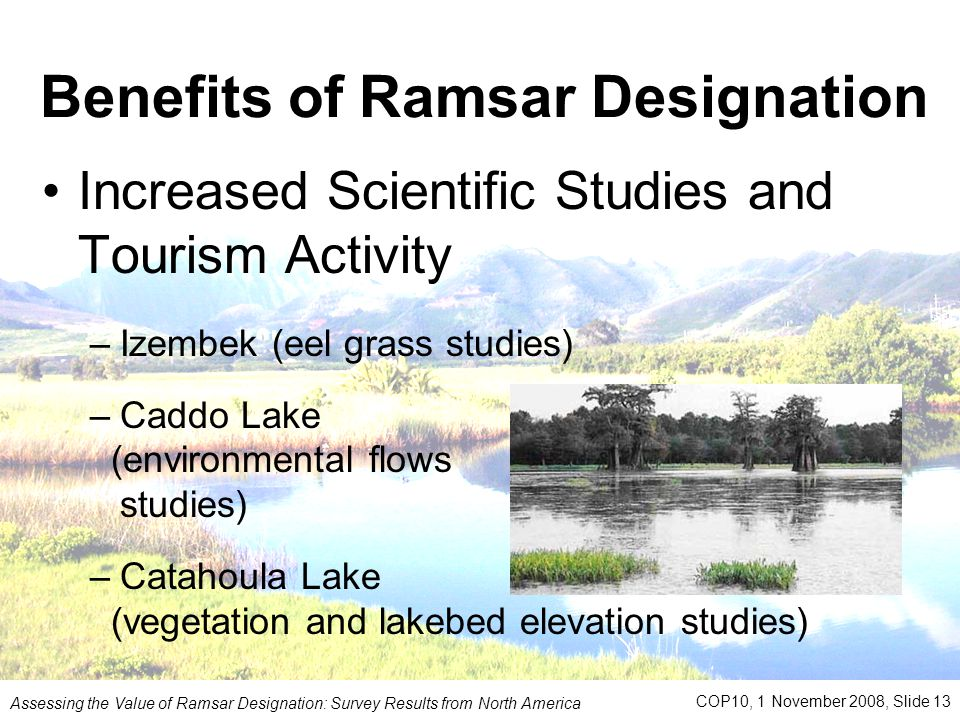 Benefits of Ramsar Designation Increased Scientific Studies and Tourism Activity –Izembek (eel grass studies) –Caddo Lake (environmental flows studies) –Catahoula Lake (vegetation and lakebed elevation studies) Assessing the Value of Ramsar Designation: Survey Results from North America COP10, 1 November 2008, Slide 13