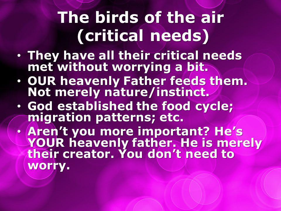 The birds of the air (critical needs) They have all their critical needs met without worrying a bit. They have all their critical needs met without wo