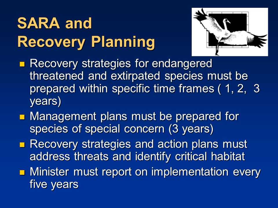 SARA and Recovery Planning Recovery strategies for endangered threatened and extirpated species must be prepared within specific time frames ( 1, 2, 3 years) Recovery strategies for endangered threatened and extirpated species must be prepared within specific time frames ( 1, 2, 3 years) Management plans must be prepared for species of special concern (3 years) Management plans must be prepared for species of special concern (3 years) Recovery strategies and action plans must address threats and identify critical habitat Recovery strategies and action plans must address threats and identify critical habitat Minister must report on implementation every five years Minister must report on implementation every five years