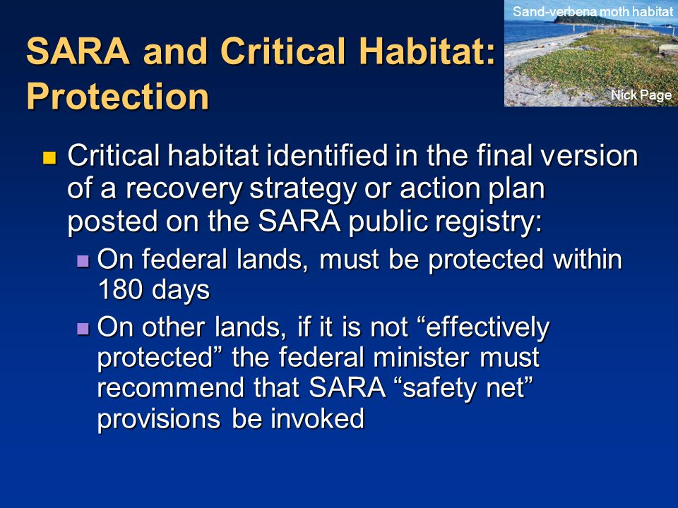 SARA and Critical Habitat: Protection Critical habitat identified in the final version of a recovery strategy or action plan posted on the SARA public registry: Critical habitat identified in the final version of a recovery strategy or action plan posted on the SARA public registry: On federal lands, must be protected within 180 days On federal lands, must be protected within 180 days On other lands, if it is not effectively protected the federal minister must recommend that SARA safety net provisions be invoked On other lands, if it is not effectively protected the federal minister must recommend that SARA safety net provisions be invoked Sand-verbena moth habitat Nick Page