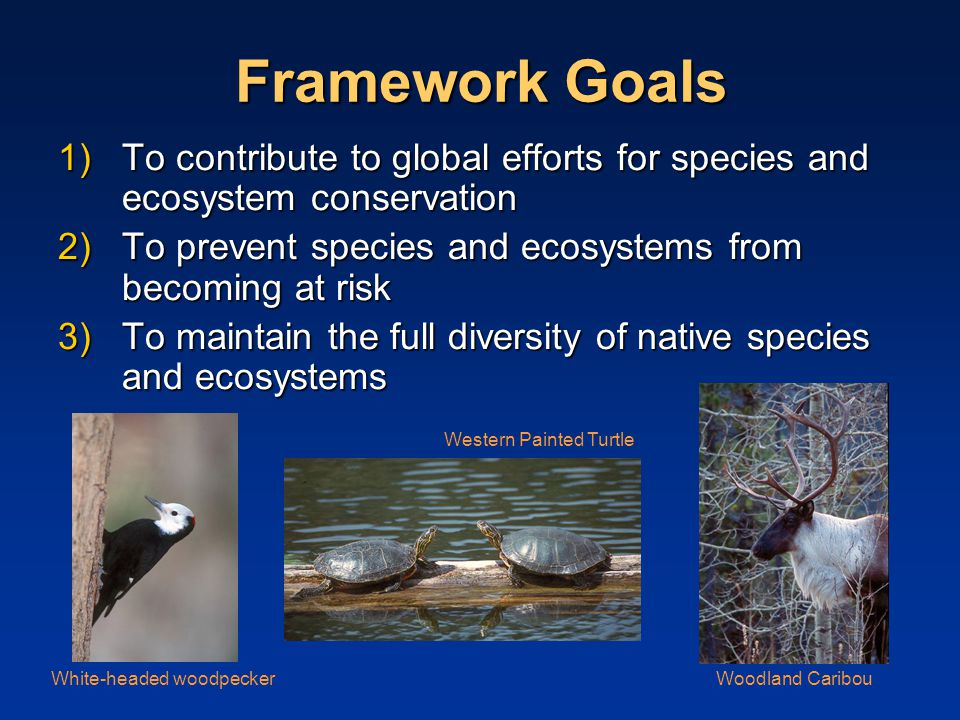 Framework Goals 1)To contribute to global efforts for species and ecosystem conservation 2)To prevent species and ecosystems from becoming at risk 3)To maintain the full diversity of native species and ecosystems Woodland CaribouWhite-headed woodpecker Western Painted Turtle