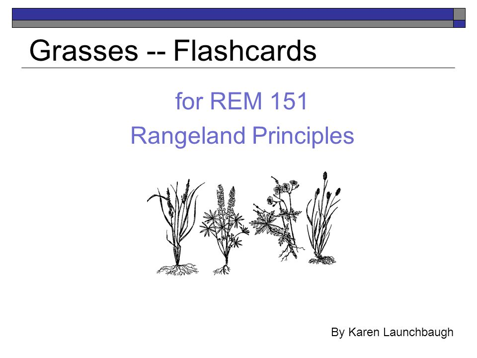 for REM 151 Rangeland Principles Grasses -- Flashcards By Karen Launchbaugh