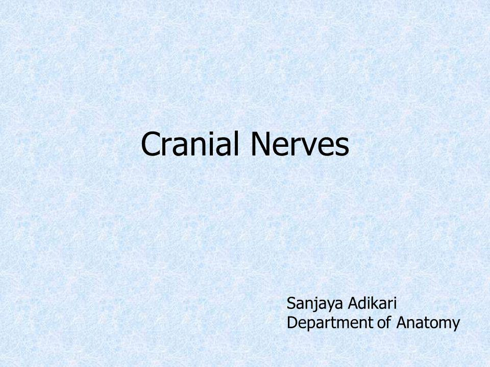 12 pairs of cranial nerves III to XII attached to brain stem Their cell bodies form nuclei in the brain stem First cell body of sensory nerves lie out side CNS (form ganglia)