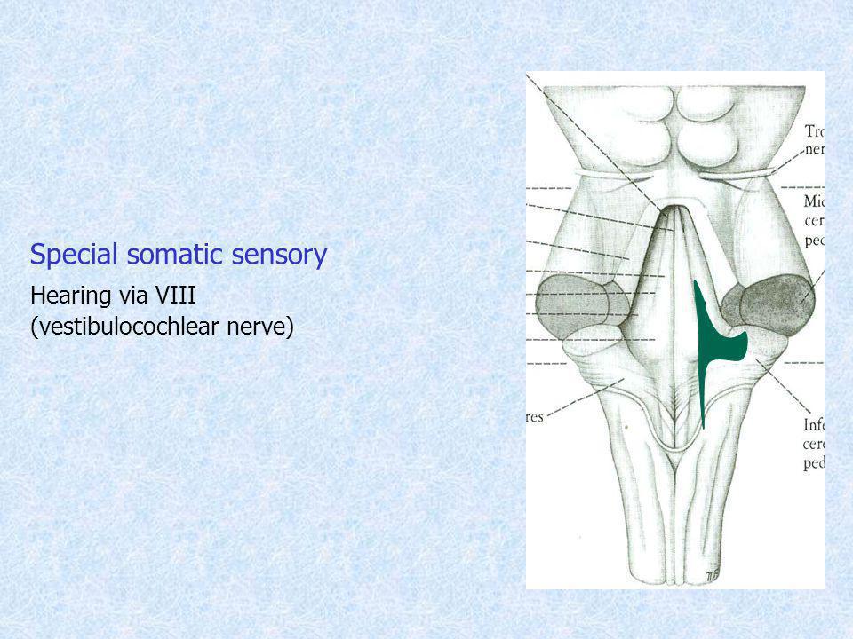 Special somatic sensory Hearing via VIII (vestibulocochlear nerve)