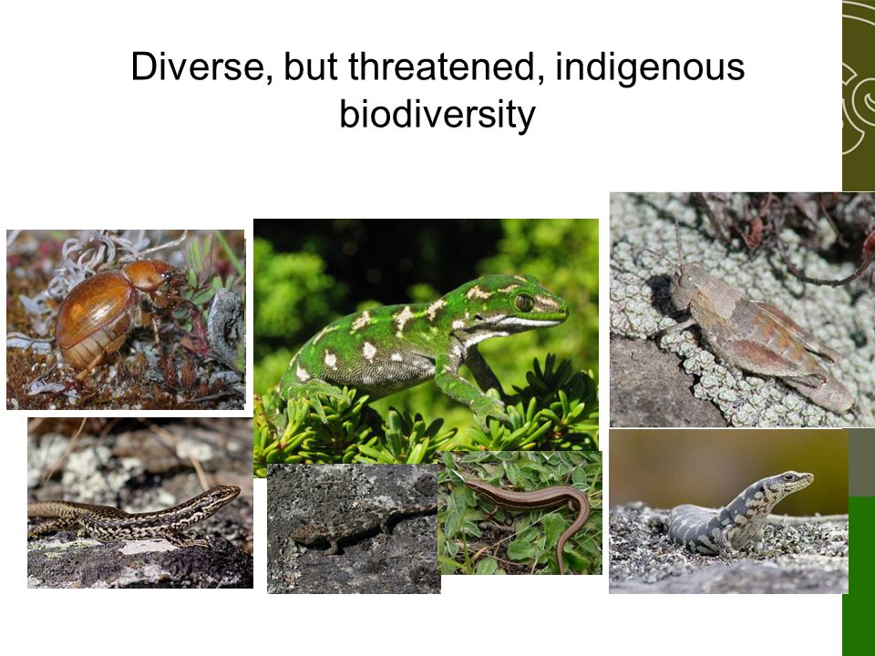 Diverse, but threatened, indigenous biodiversity