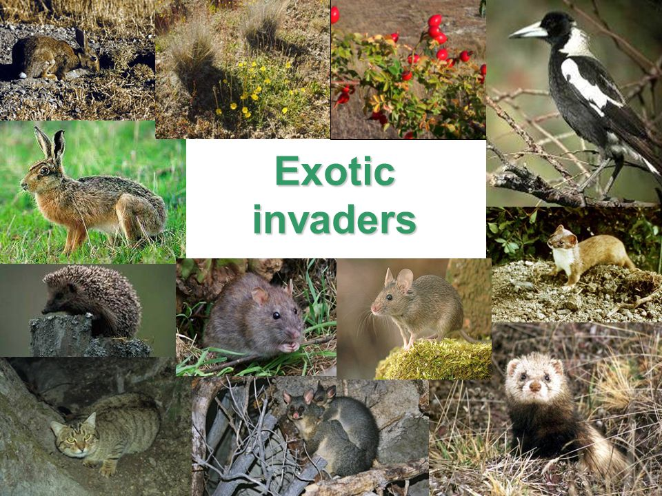 Exoticinvaders
