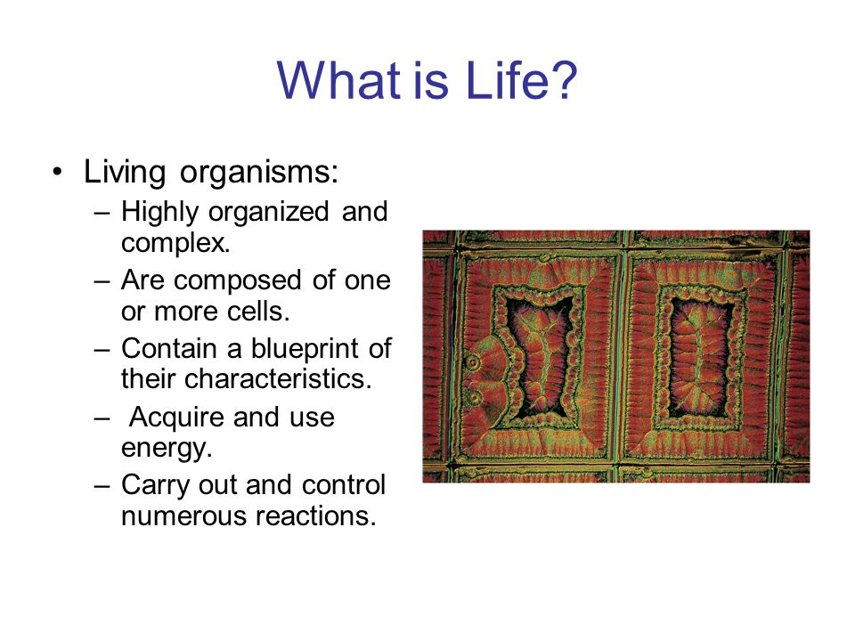 What is Life. Living organisms: –Highly organized and complex.