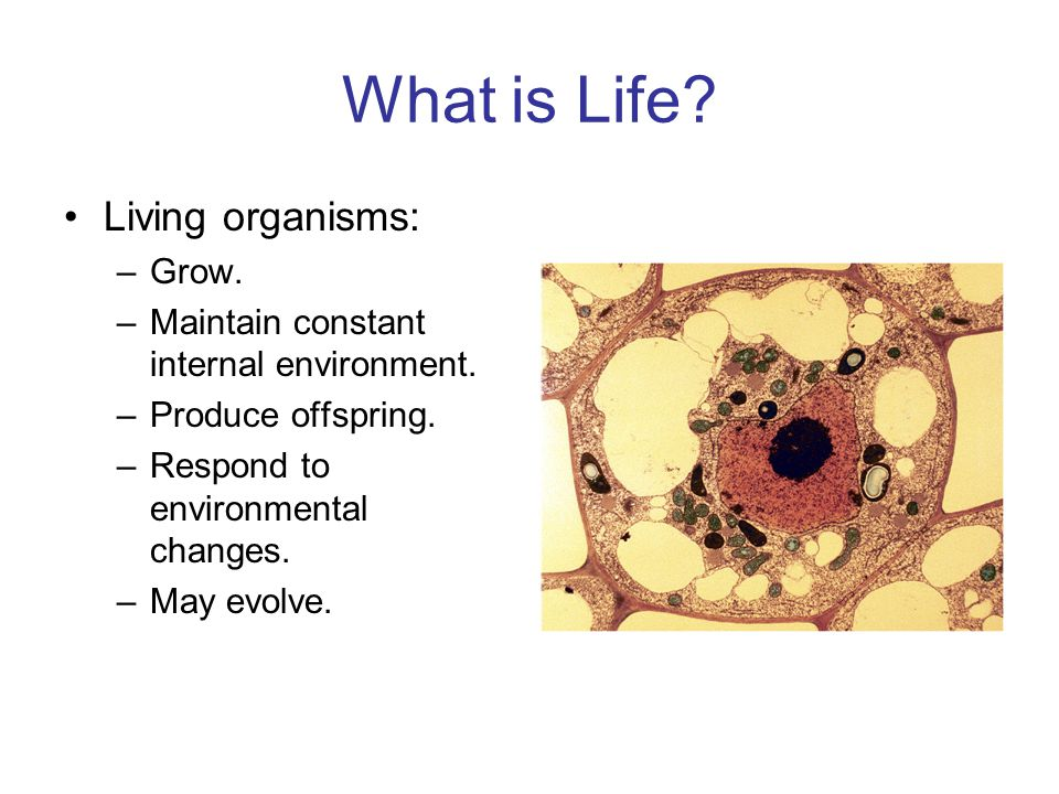 What is Life. Living organisms: –Grow. –Maintain constant internal environment.
