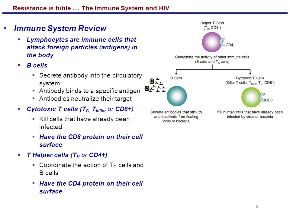 Resistance is futile … The Immune System and HIV 15 A.The Super Cytotoxic T Cells Hypothesis B.The Super T Helper Cells Hypothesis C.Neither hypothesis is supported Clicker Question 4 If your results for the resistant group look like those on the right, which hypothesis is supported.