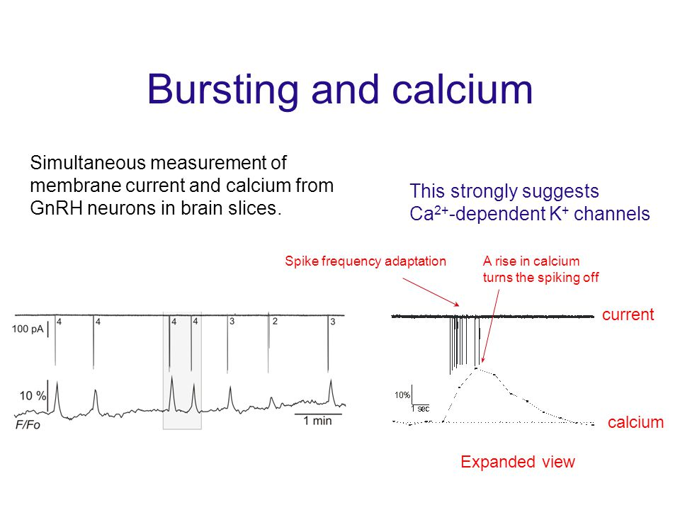 Bursting and calcium Simultaneous measurement of membrane current and calcium from GnRH neurons in brain slices.