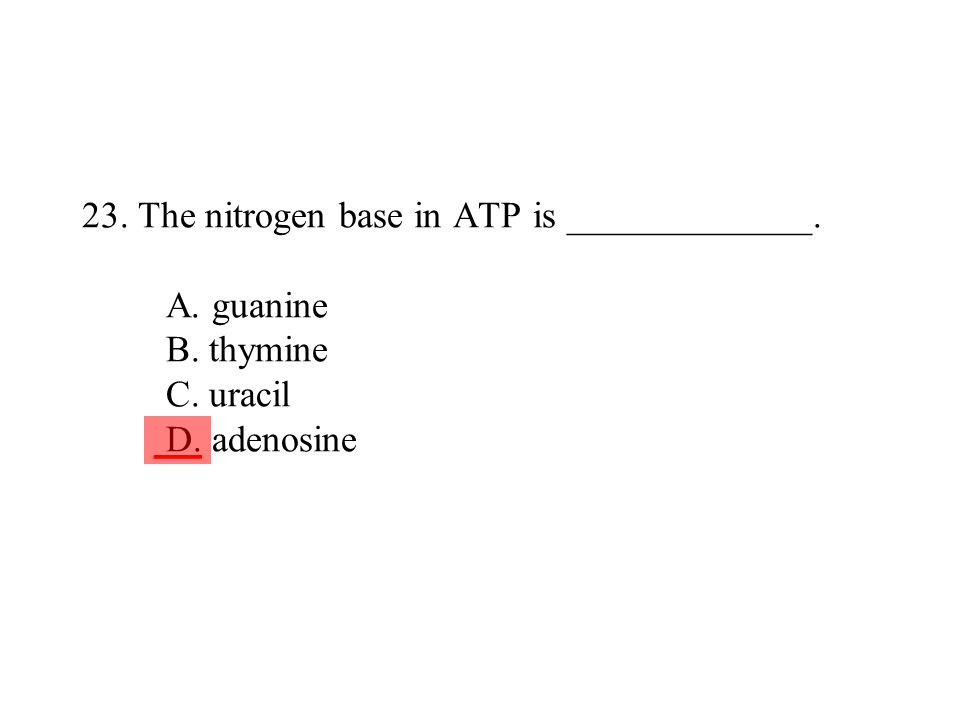 23. The nitrogen base in ATP is _____________. A. guanine B. thymine C. uracil D. adenosine ___