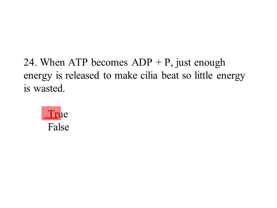 24. When ATP becomes ADP + P, just enough energy is released to make cilia beat so little energy is wasted. True False ___