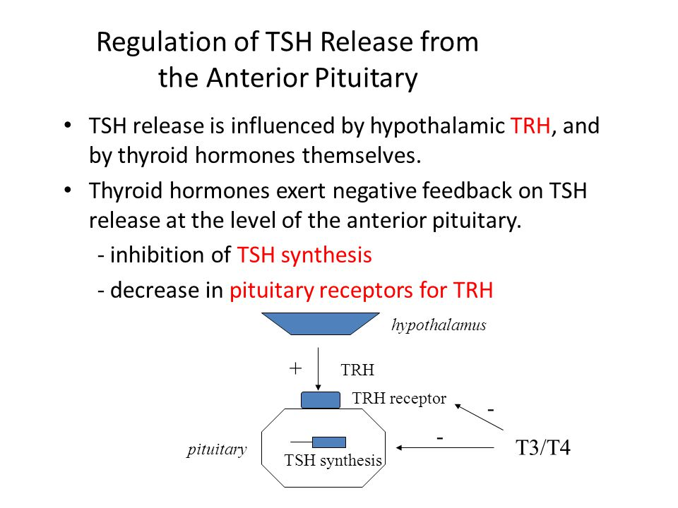 Regulation of TSH Release from the Anterior Pituitary TSH release is influenced by hypothalamic TRH, and by thyroid hormones themselves. Thyroid hormo