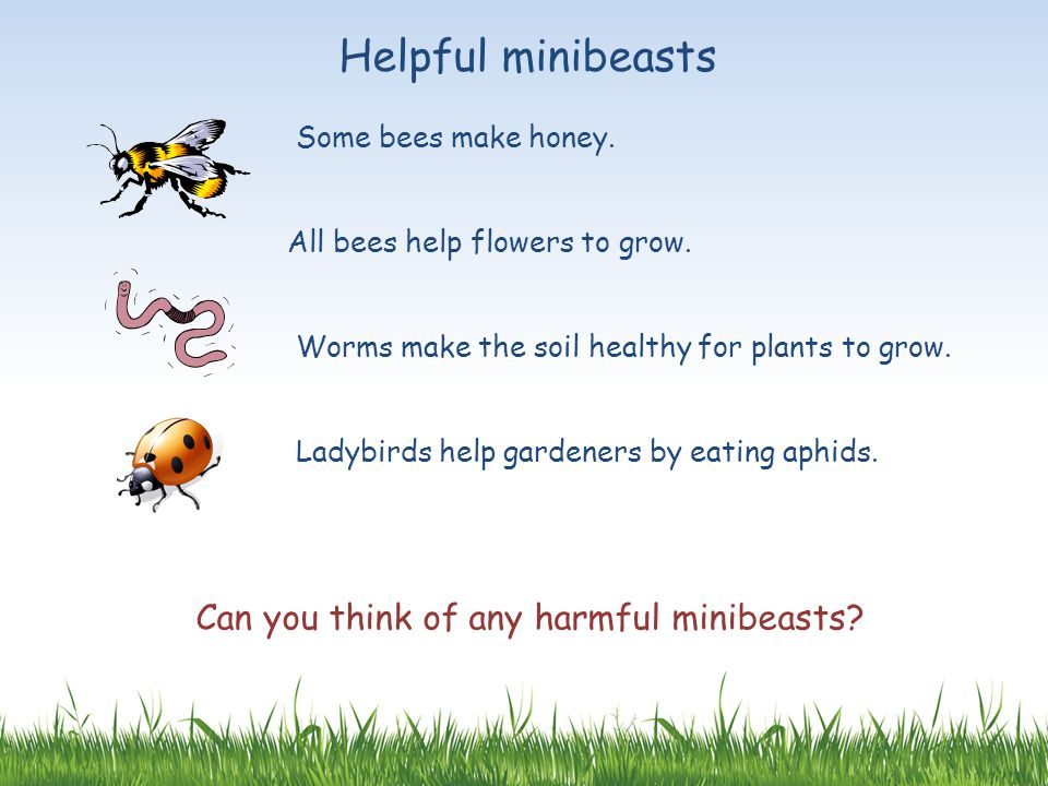 Helpful minibeasts Some bees make honey. All bees help flowers to grow. Worms make the soil healthy for plants to grow. Ladybirds help gardeners by ea