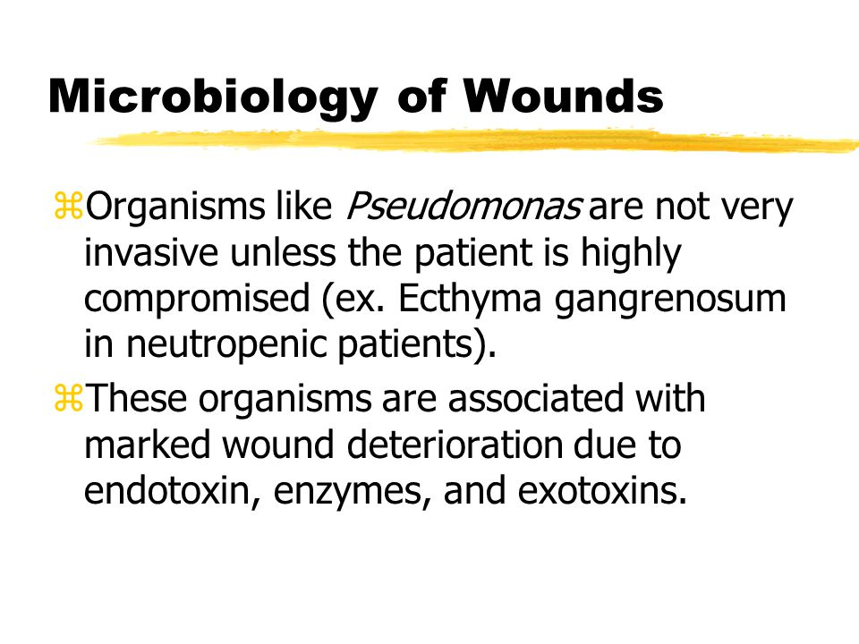 Microbiology of Wounds zOrganisms like Pseudomonas are not very invasive unless the patient is highly compromised (ex. Ecthyma gangrenosum in neutrope