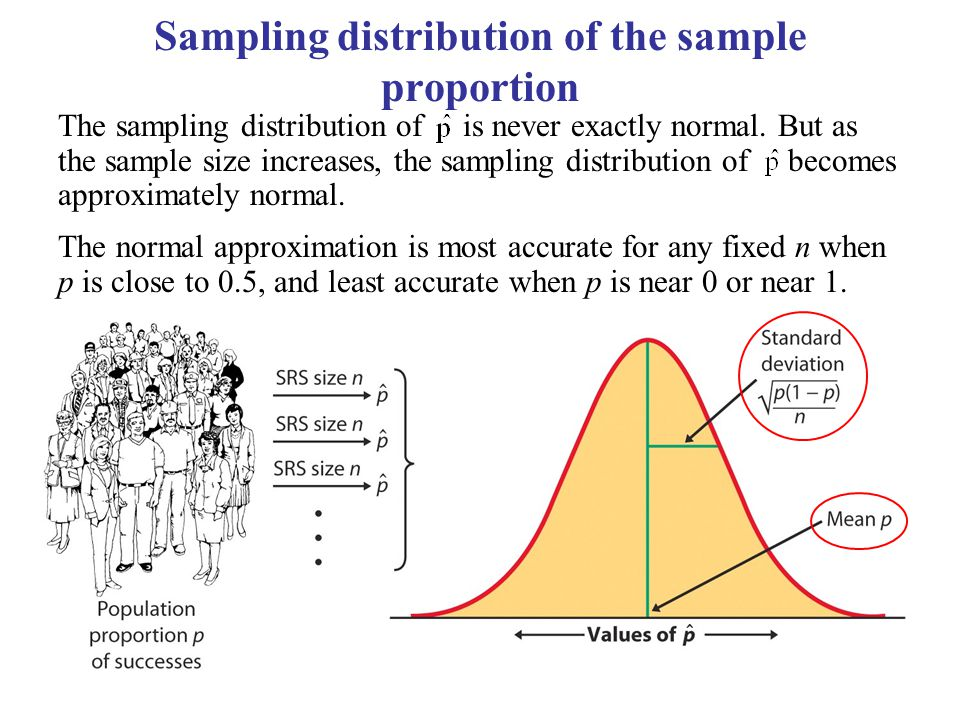 Sampling distribution of the sample proportion The sampling distribution of is never exactly normal. But as the sample size increases, the sampling di