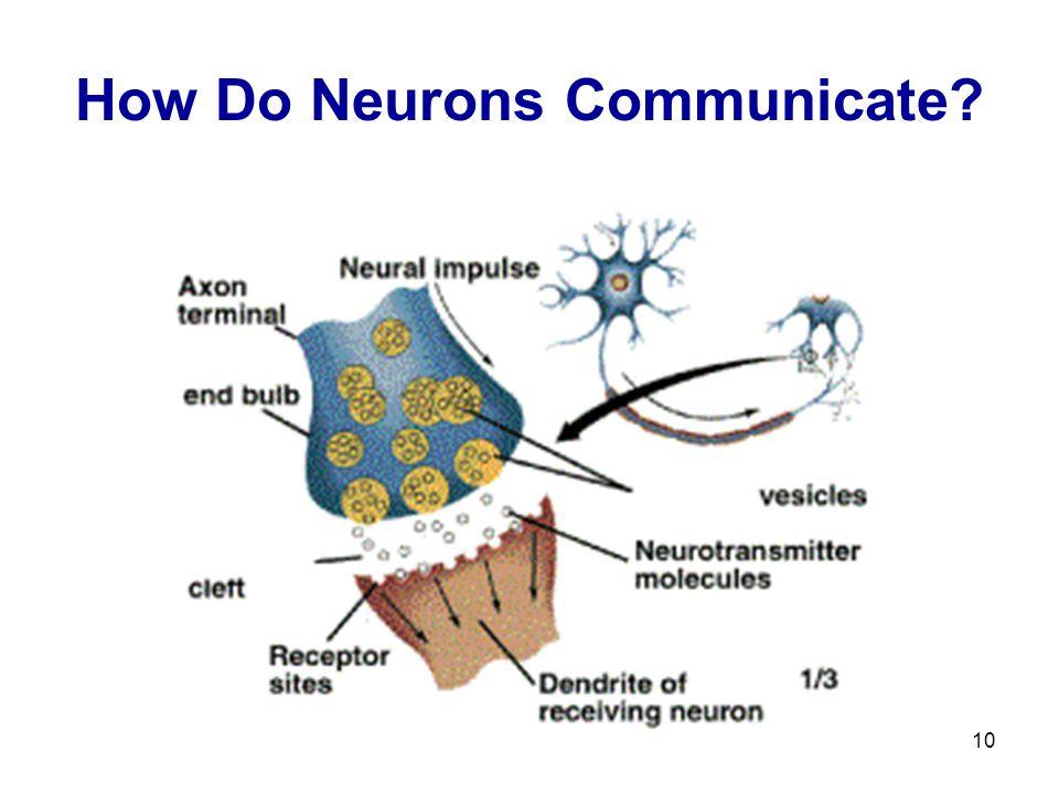 10 How Do Neurons Communicate?