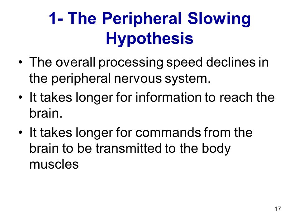 17 1- The Peripheral Slowing Hypothesis The overall processing speed declines in the peripheral nervous system. It takes longer for information to rea