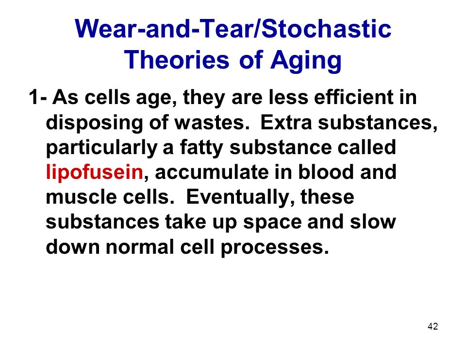 42 Wear-and-Tear/Stochastic Theories of Aging 1- As cells age, they are less efficient in disposing of wastes. Extra substances, particularly a fatty