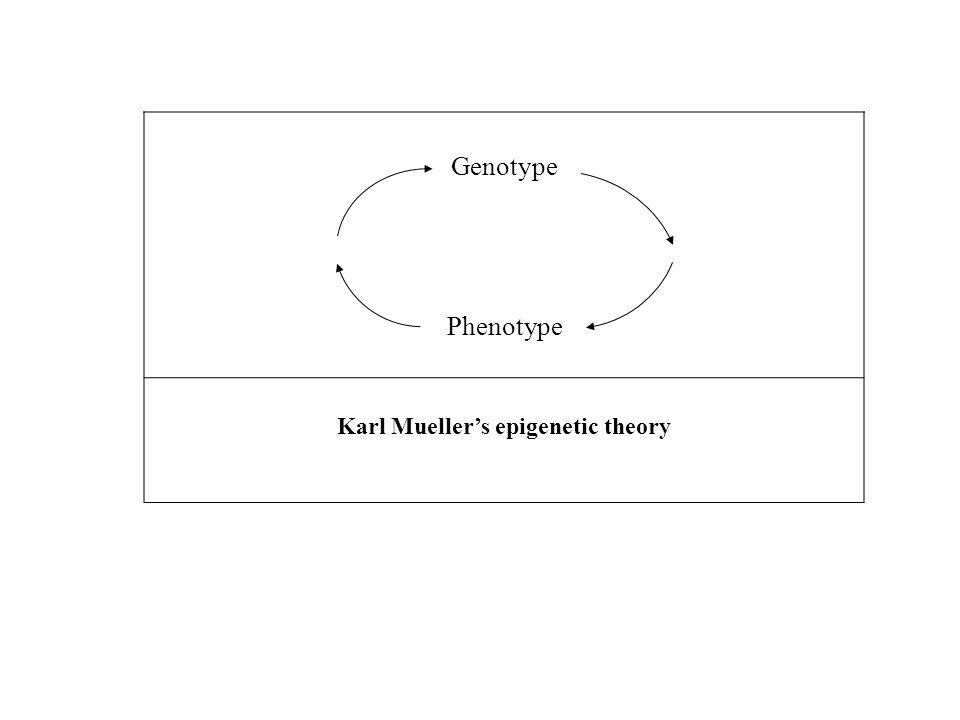 Genotype Phenotype Karl Mueller's epigenetic theory