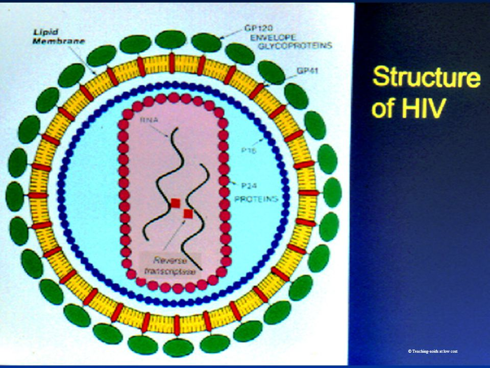 4 What is HIV/AIDS.Viruses multiply inside body cells & cause illness.