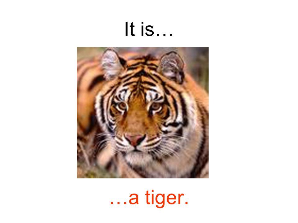 It is… …a tiger.