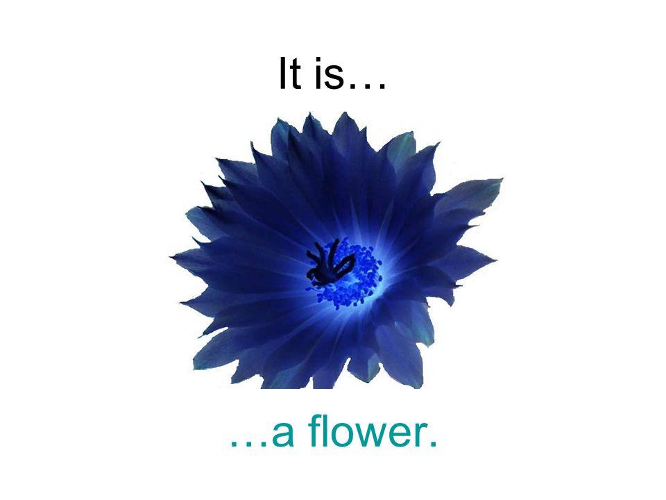 It is… …a flower.